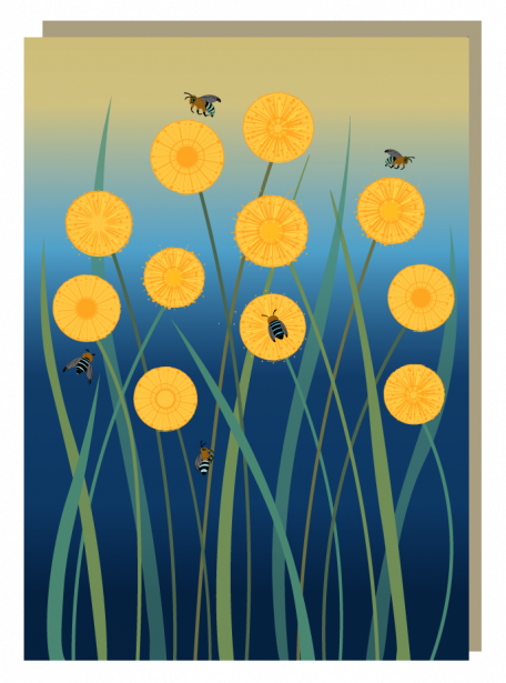 Billy buttons, blue-banded bees